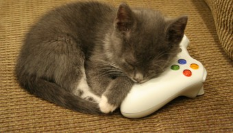 gamekitten